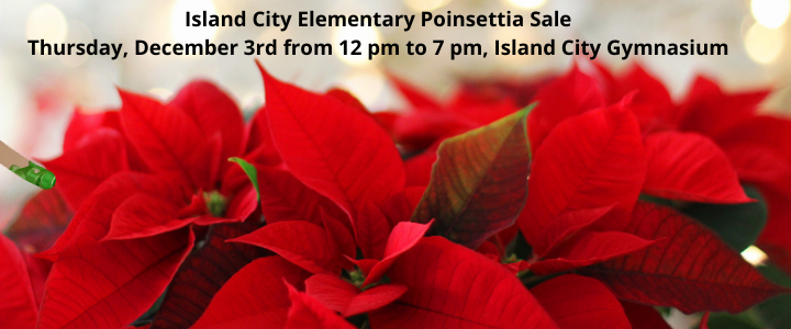 Island City Elementary Poinsettia Sale, December 3rd from 12 pm to 7 pm, Island City Gymnasium